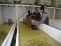 Zivju mazuļu ielaišana Prūšu ūdenskrātuvē