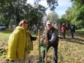 Parka stādījumu atjaunošana Krotē